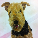 Brodie the Airedale